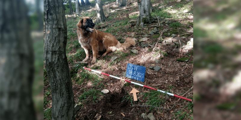Poklad se podařilo najít bystré fence Máše.