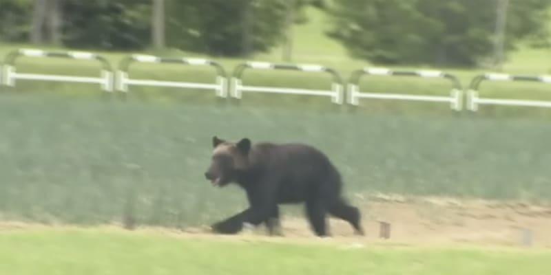 Snímek medvěda zachyceného na videu poblíž vojenská základny na severu Japonska.