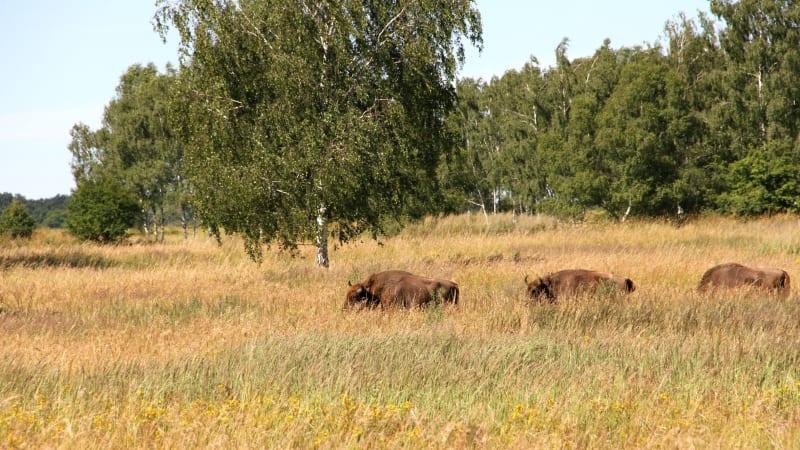 Z Afriky na Sibiř za pár minut pěšky! To návštěvníkům nabízí přírodní rezervace Milovice